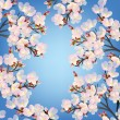 Delicate cherry flowers on branch blooming in spring time — Stock Photo