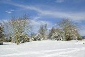 Winter postcard — Stock Photo