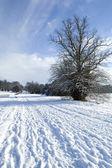 Snow tree — Stock Photo