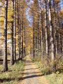 Road in autumn forest — Stock Photo