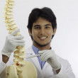 Stock Photo: Chiropractic doctor