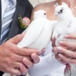Royalty-Free Stock Photo: Wedding pigeons in hands of the groom and the bride