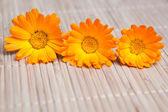 Gelbe blume auf bambusmatte — Stockfoto