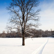 Stockfoto: Snowmobile hot scent