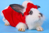 Black and white rabbit with Santa hat — Stock Photo