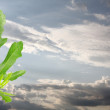 Stock Photo: Young fig leafs against dramatic sky