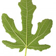 Fig leaf — Stock Photo #5360542