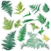 Folhas de samambaia — Foto Stock