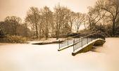 Winter Pond — Stock Photo