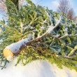 Pine Tree — Stock Photo