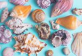 Conchiglie assortite — Foto Stock