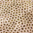Royalty-Free Stock Photo: Coral Rock Texture