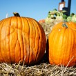 Stock Photo: Beautiful pumpkins