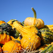 Large and small pumpkins - Stock Photo