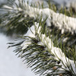Christmas tree covered with snow — Stock Photo