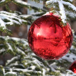 Bauble on fir — Stock Photo