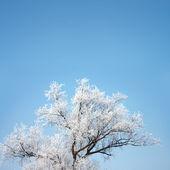 Tree - drawn from the winter — Stock Photo
