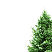 Green Christmas Tree with space for text — Stock Photo