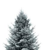 Donkere groene kerstboom — Stockfoto