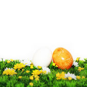 Yellow and white egg — Stock Photo