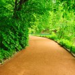 winding path — Stock Photo