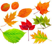 Herbarium. Collection of different leaves. — Stock Photo