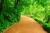 Winding path — Stock Photo