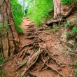 Stock Photo: Winding path