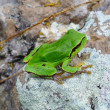Green frog sitting on a stone — Stock Photo