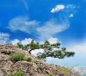Beautiful tree in the mountains — Stock Photo