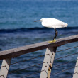 A Seagull on a rail — Stock Photo