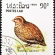 Stock Photo: Japanese Quail bird stamp.