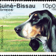 Grande Azul dog stamp. — Stock Photo