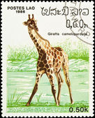 Giraffe stamp. — Stock Photo