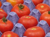 Tomater i kruka. — Stockfoto
