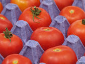 Tomatoes in a pot. — Stock fotografie