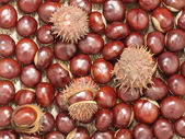Chestnuts.Background. — Photo