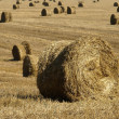 Stock fotografie: Stacks of hay on field.