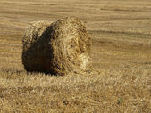 Stack of hay on the field. — Stock Photo