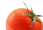Verse tomaat op witte achtergrond — Stockfoto