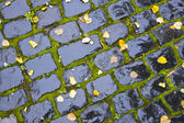 Wet Cobblestone — Stock Photo