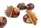 Chestnuts with shell on white background — Stock Photo