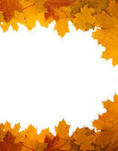 Frame of autumn leaves on a white background — Stock Photo