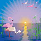 Flamingos — Stock Vector