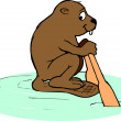 Beavers Rowing — Stock Photo