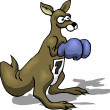 Kangaroo Boxing — Stock Photo