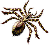 Tarantula — Vector de stock