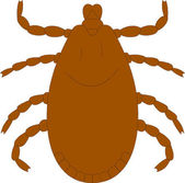Tick — Stock Vector