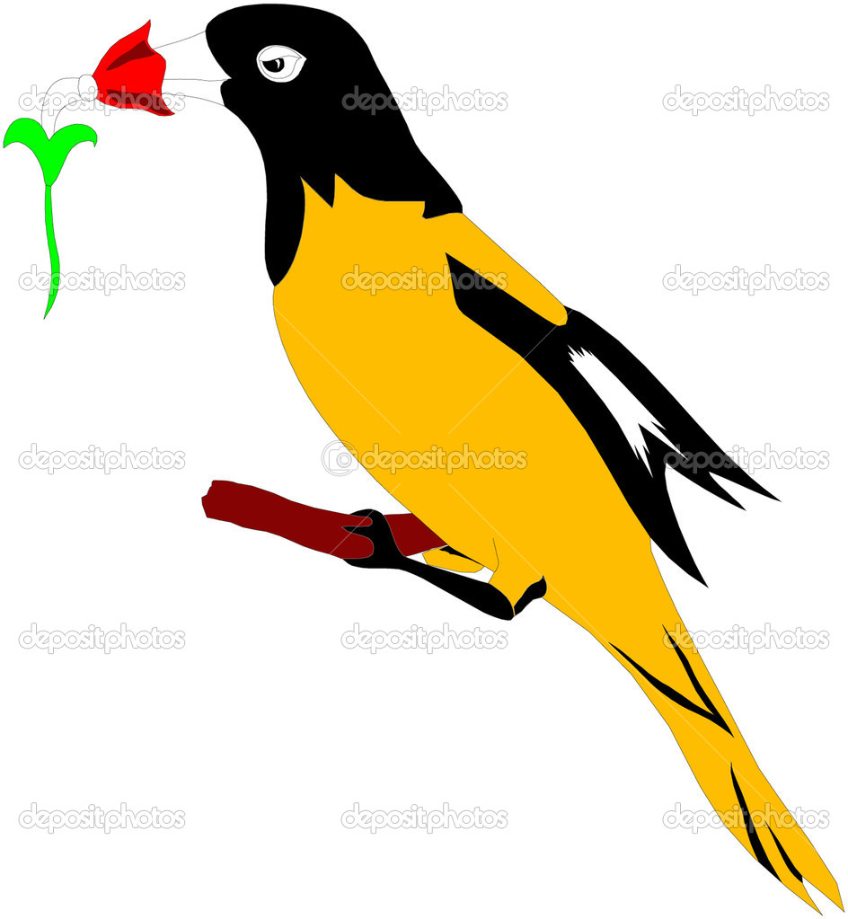 Oriole  — Stock Vector #4358836