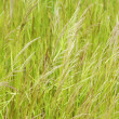 Stock Photo: Grass in meadow